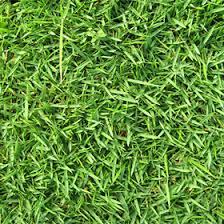 Sod For Your Yard Turf Grass Coastal Sod